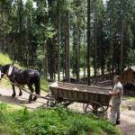 Burgbau Friesach Fuhrwerk