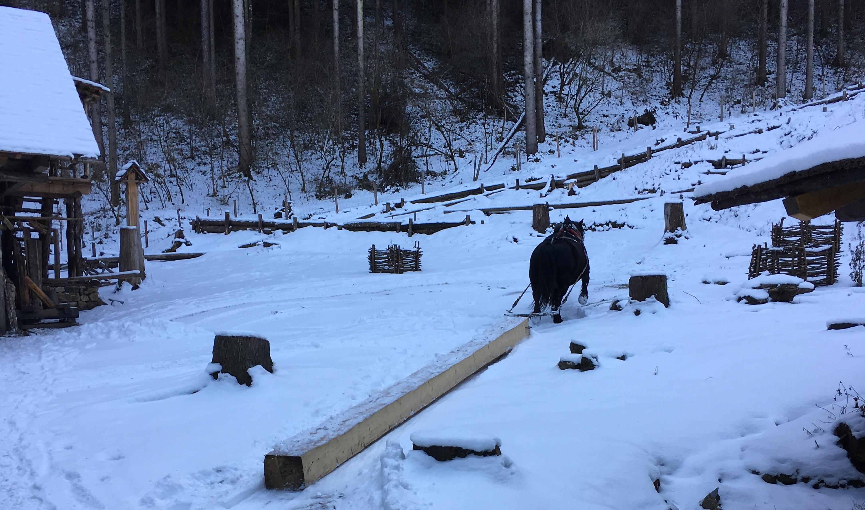 Holzrücken-mit-Pferd4-01_2018