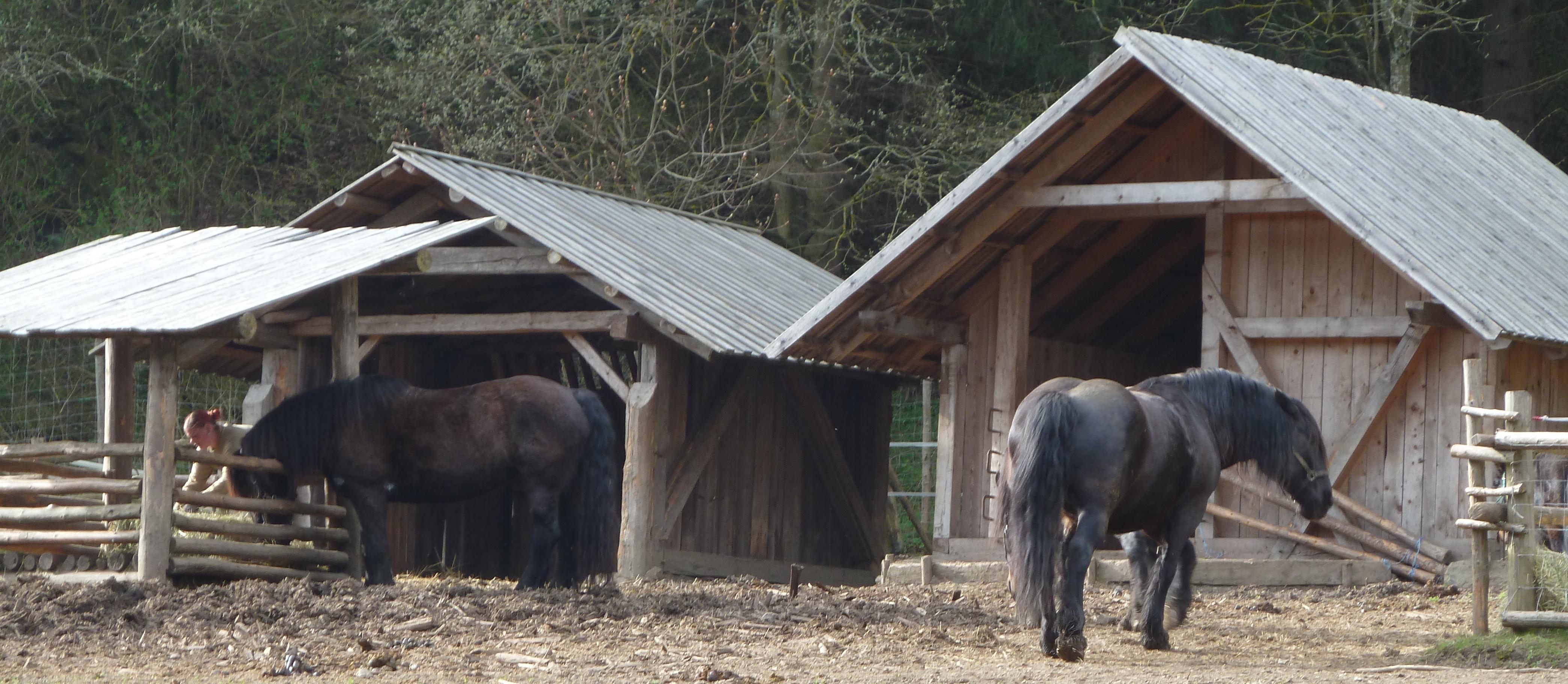 Stallungen-Pferde-04_14